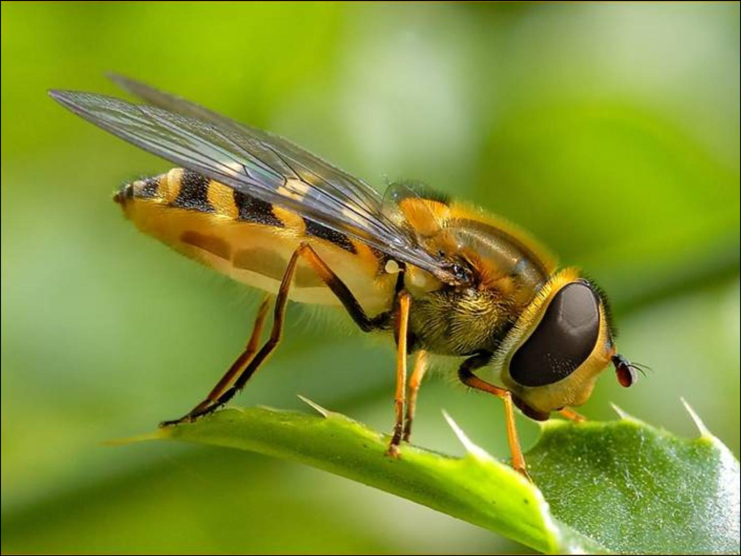 İnsanoğlu Teknoloji Sayesinde Arılarla İletişim Kurmayı Başardı!